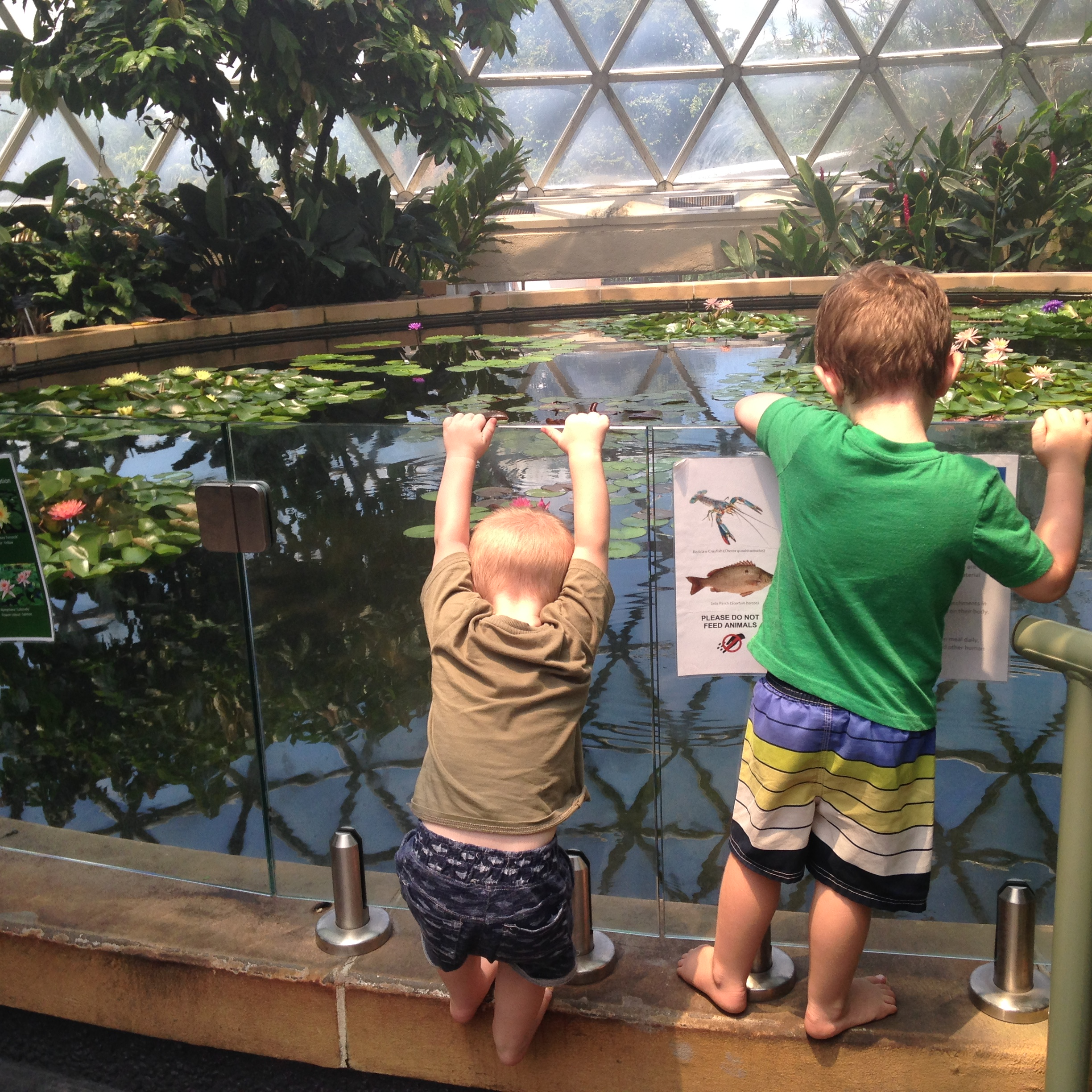 Brisbane with Toddlers – free things to do and see!