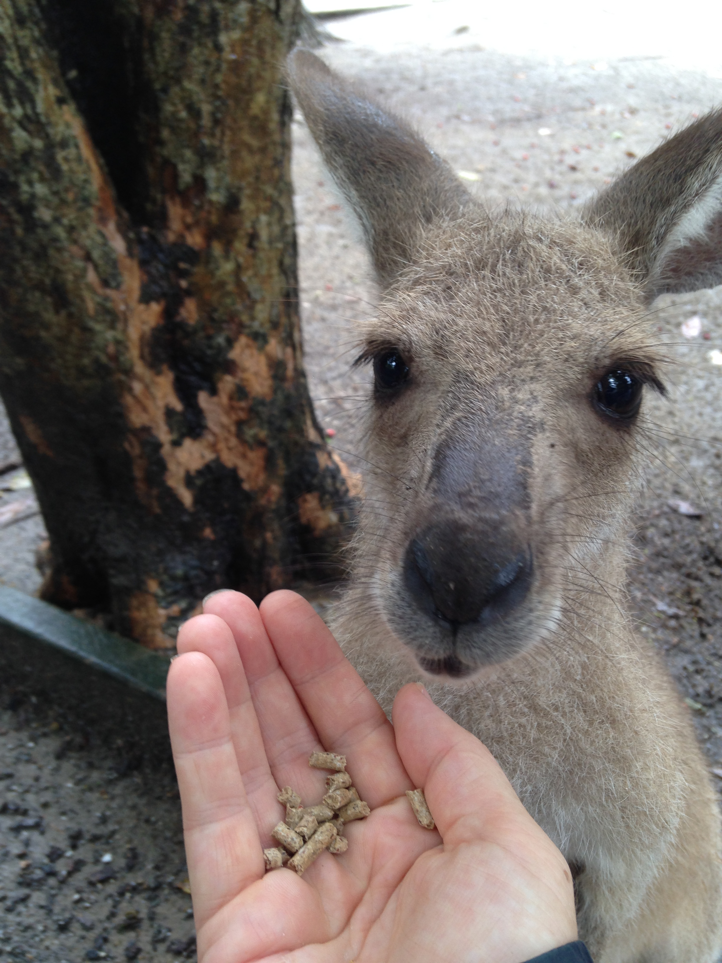 Cuddling a koala, breakfasting with birds and snuggling a snake in Cairns – Wildlife Habitat Zoo