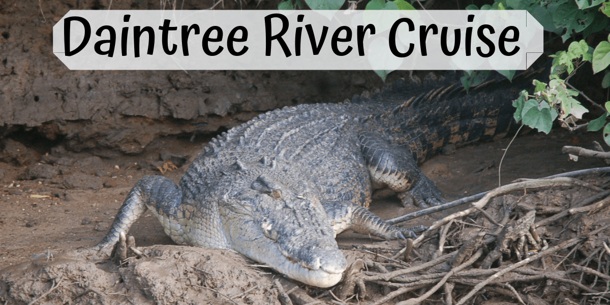 Daintree River Cruise Review – Bruce Belcher