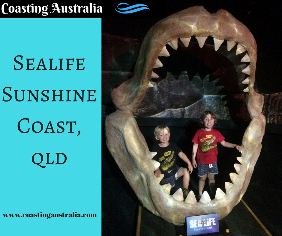 Sealife Sunshine Coast – Family Fun Under the Sea