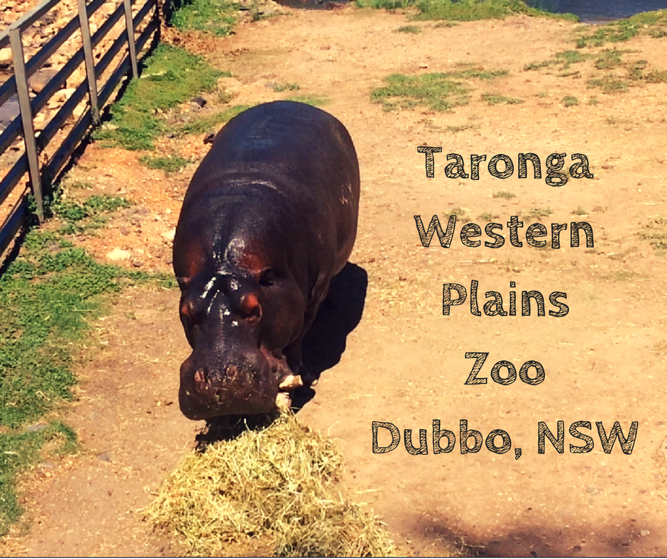 Kids Go Wild at Taronga Western Plains Zoo – Dubbo