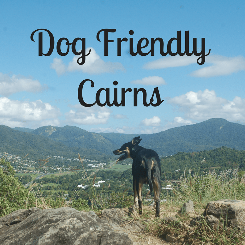 Dog Friendly Cairns – Things to do with your Dog in Tropical North Queensland