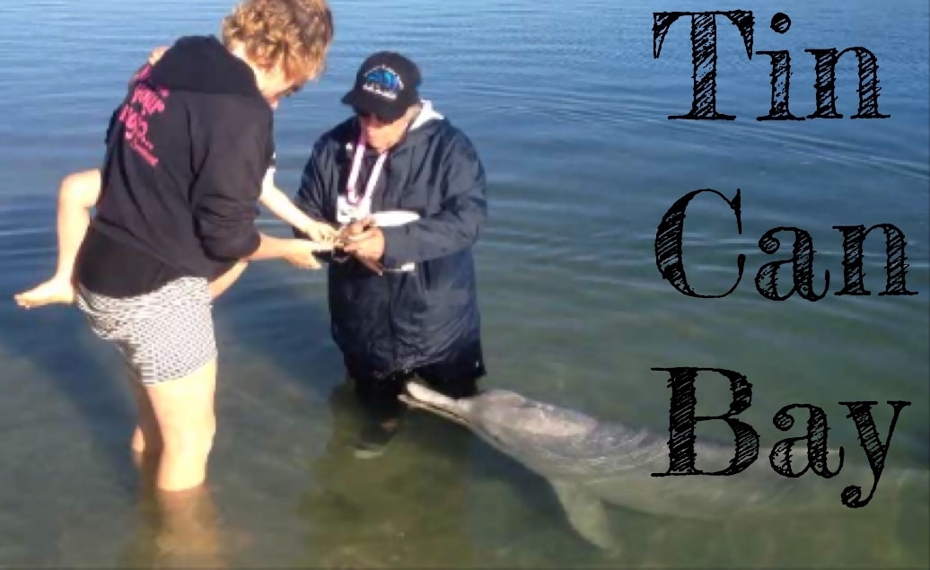 Tin Can Bay Dolphin Feeding – Hand Feed Wild Dolphins