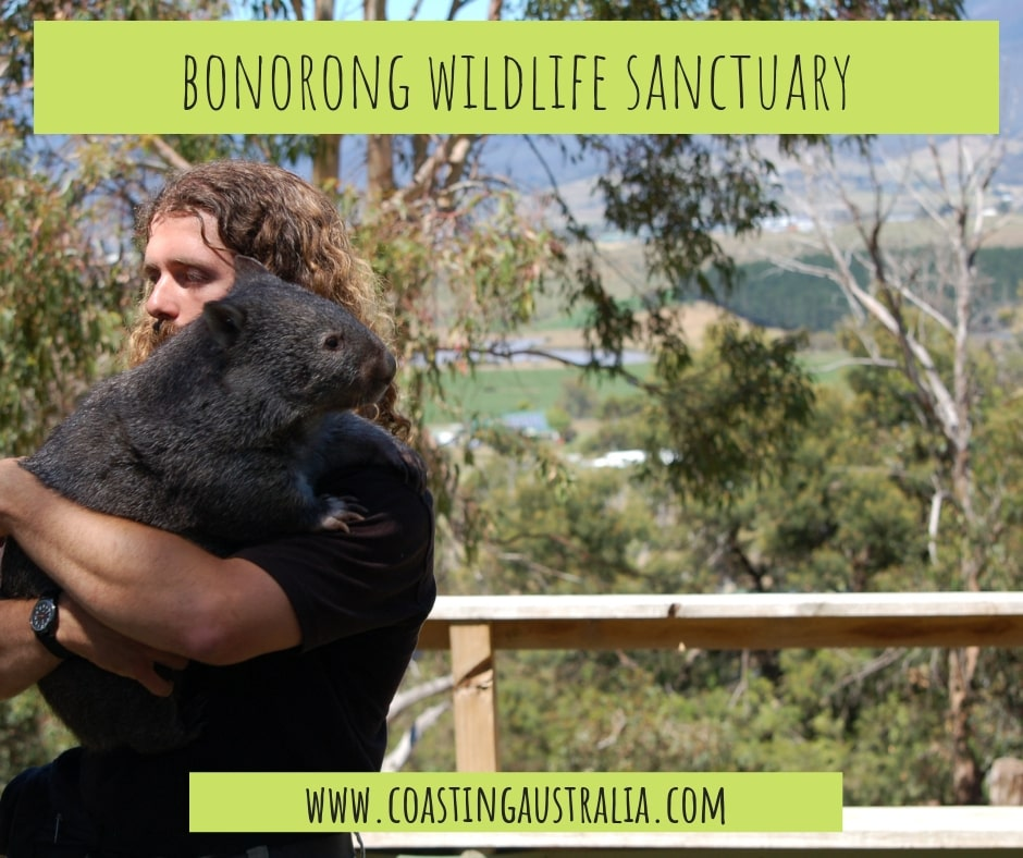 Bonorong Wildlife Sanctuary – Empowering Animal Experiences in Tasmania