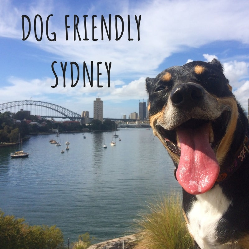 Sydney Dog Walks – Dog Friendly Sydney